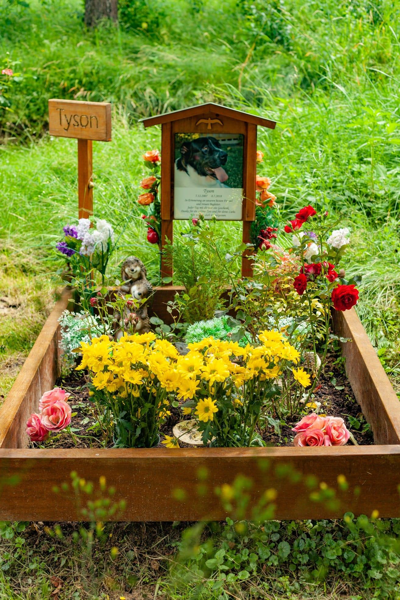 tierfriedhof 6