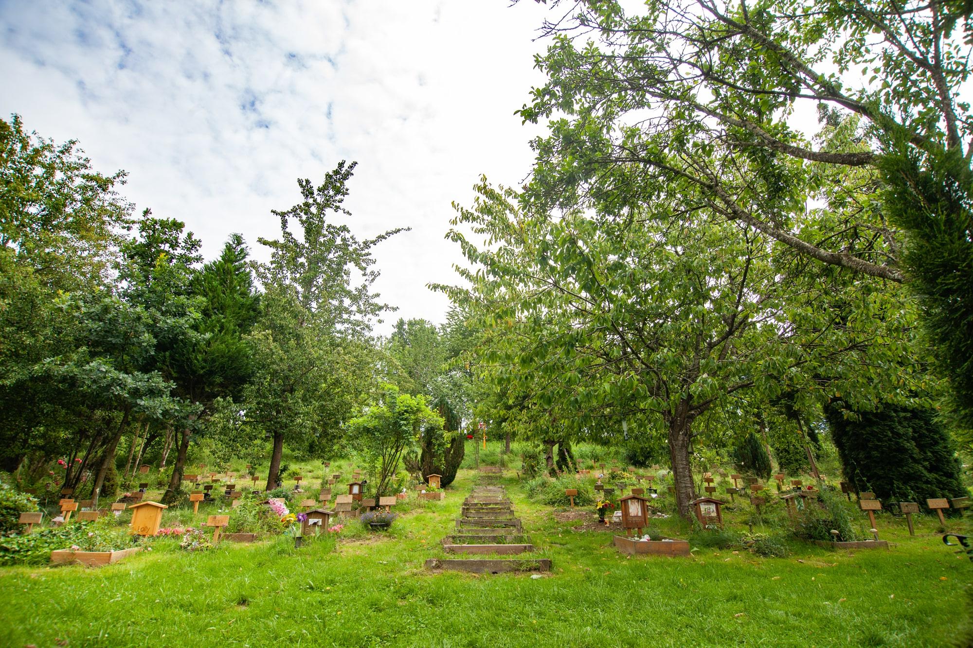 tierfriedhof 18