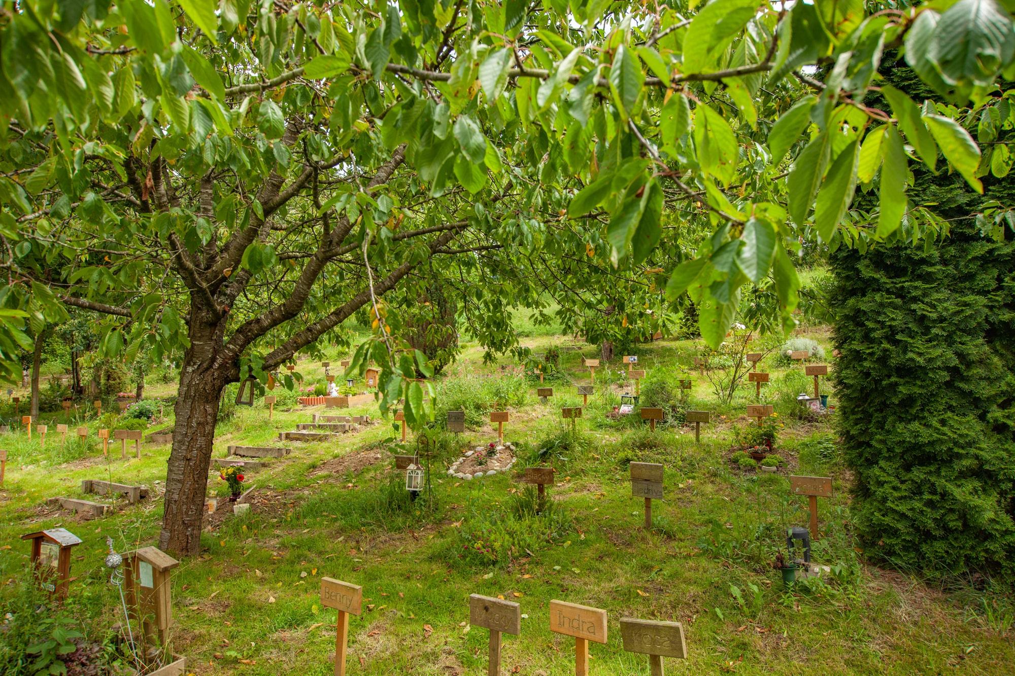 tierfriedhof 22